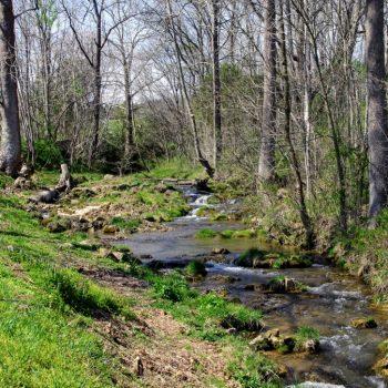 Ott's Creek